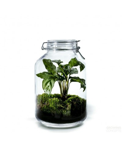 Growing Concepts Jar Large...
